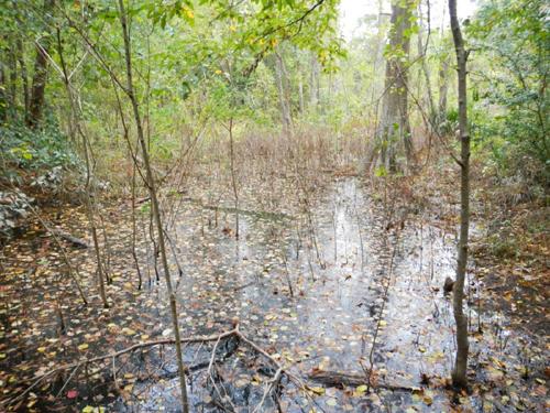 Wetland Delineation Corpus Christi